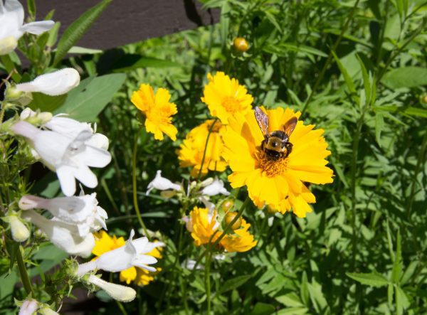 Bees & Butterflies Pollinator Seed Mix