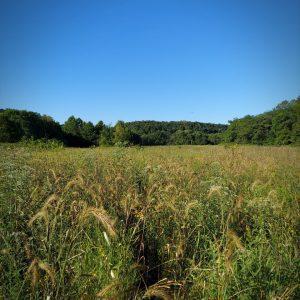 bottomland blend prairie seed mix